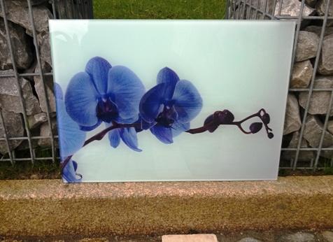 Une impression de fleurs bleues sur un plateau en verre.
